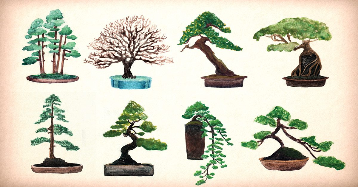 Bonsai originated in the East about 1000 to 500 BC. This Eastern art became more prevalent in the Han, T'Sun and the Tang Dynasties in China.