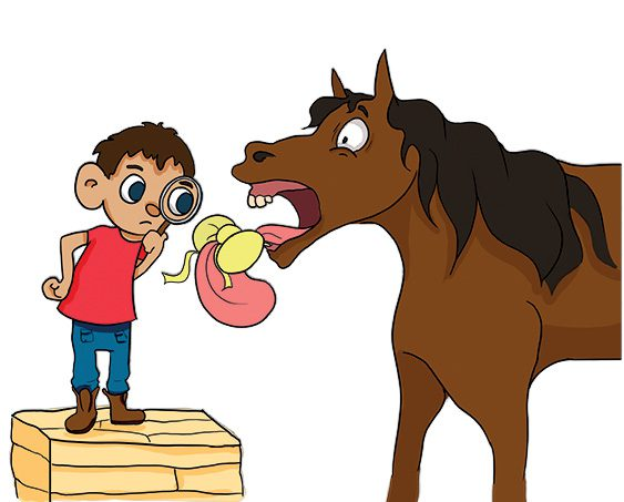An image of the proverb don't look a gift horse in the mouth.